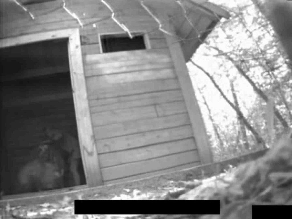 白人さんの野外排せつ盗撮vol.2 オマタギャル | 野外  65連発